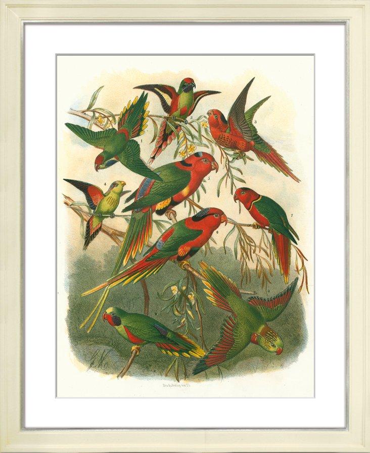 Fischer Parrots II