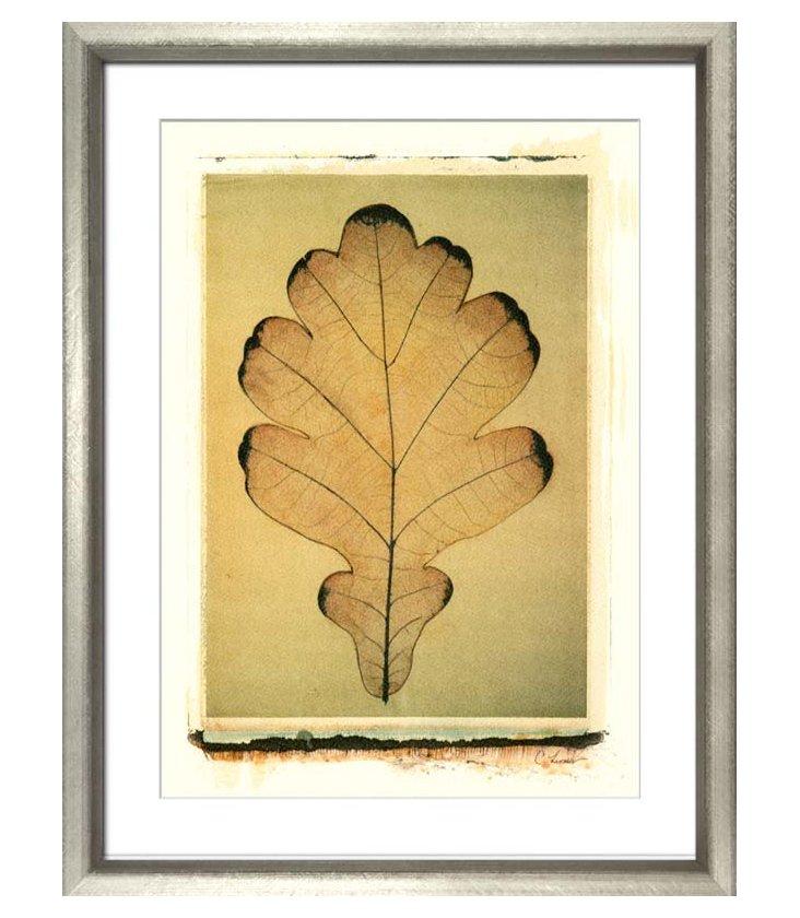 Leaf IV