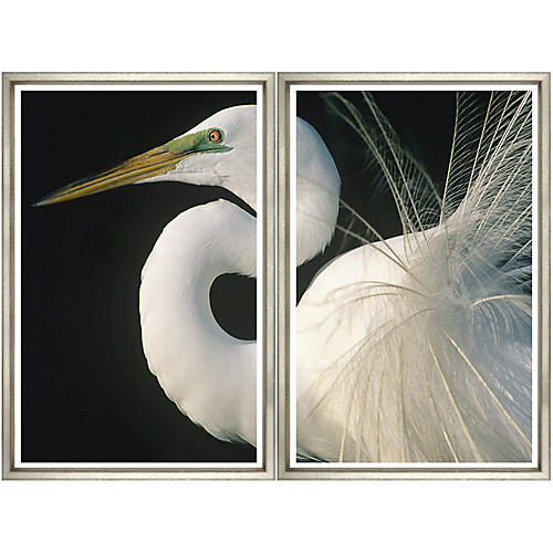 Great Egret Diptych
