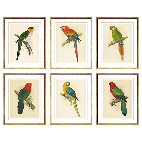 Parrots, Set of Six