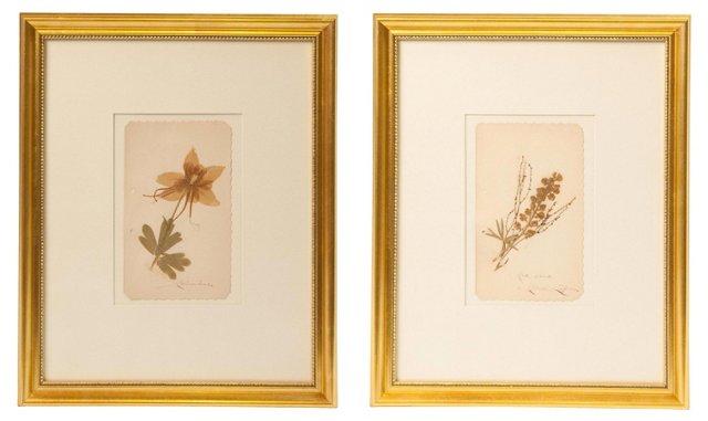 Vintage Herbariums, Pair, I