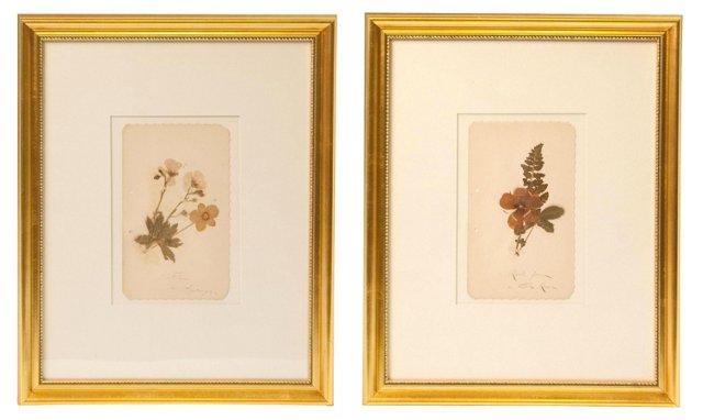 Vintage Herbariums, Pair, III