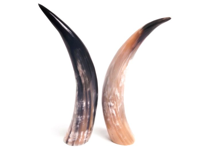 Small Nguni Cow Horn Objet