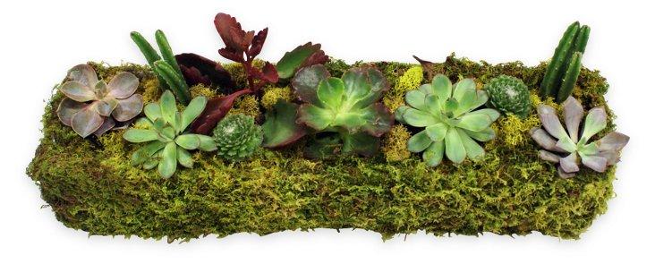 """18"""" Succulent Planter, Live"""