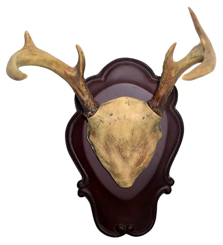 Six-Point Antler Wall Decor, Natural