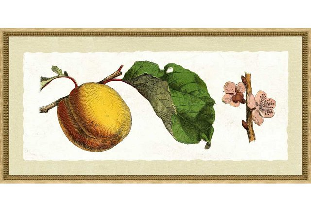 Botanical Fruit Print I, Cream Frame