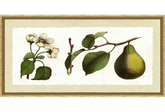 Botanical Fruit Print III, Cream Frame