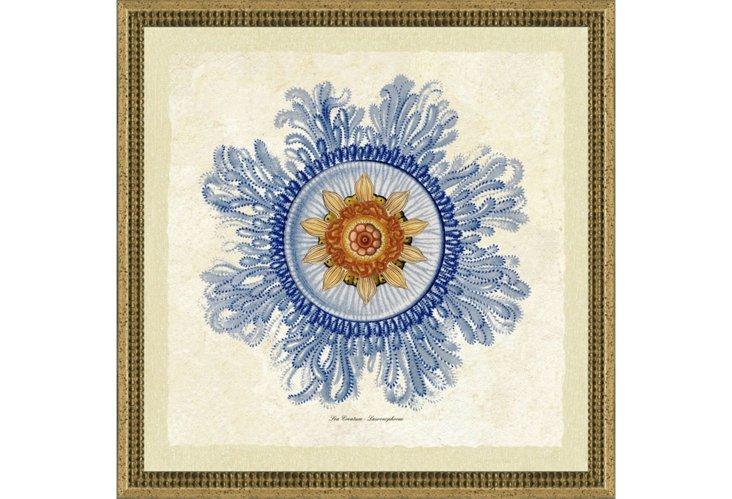 Blue Haeckel I, Silver Frame