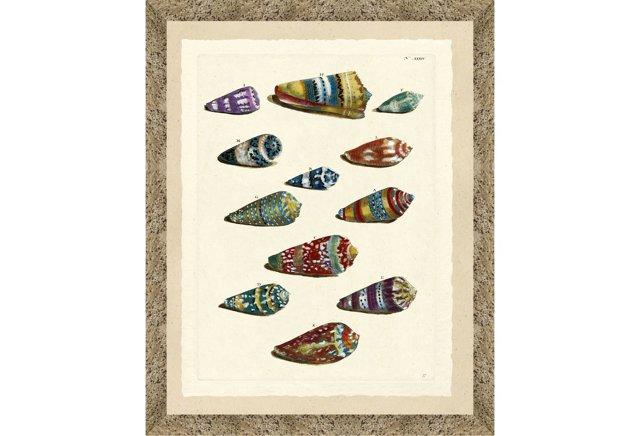 Colorful Shell Print I