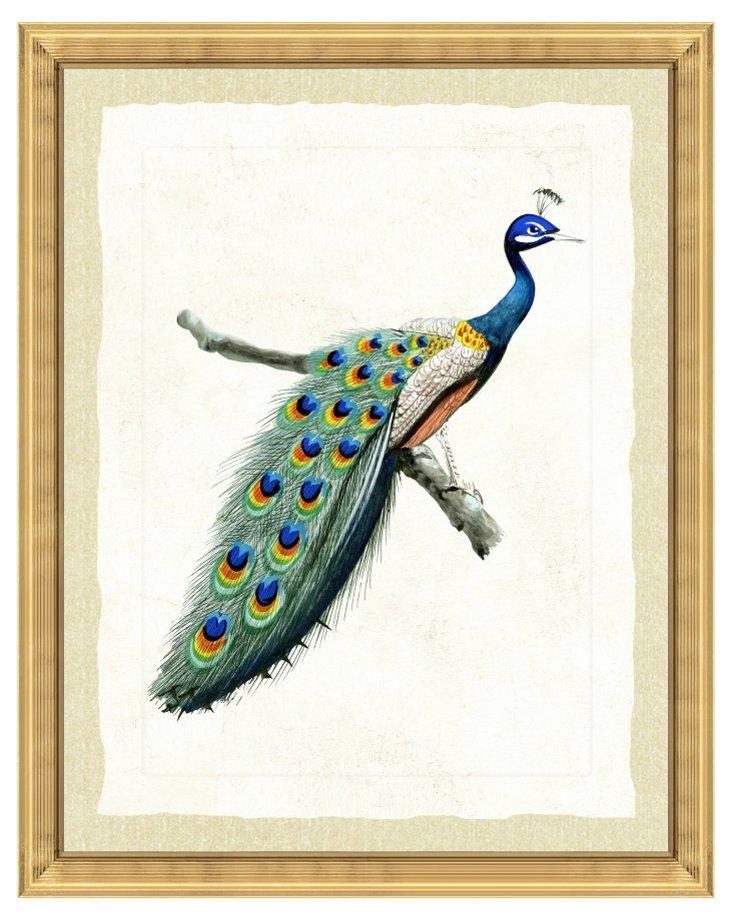 Gold Framed Peacock Print I