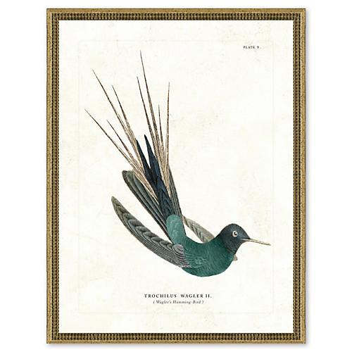Hummingbird Print I, Silver Frame