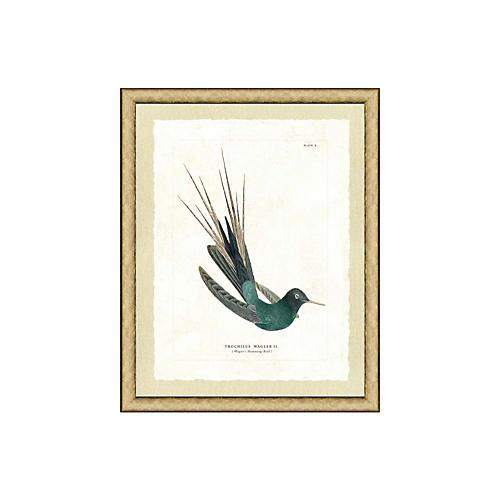 , Hummingbird V