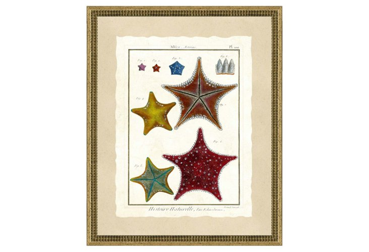Rustic Silver Framed Starfish Print