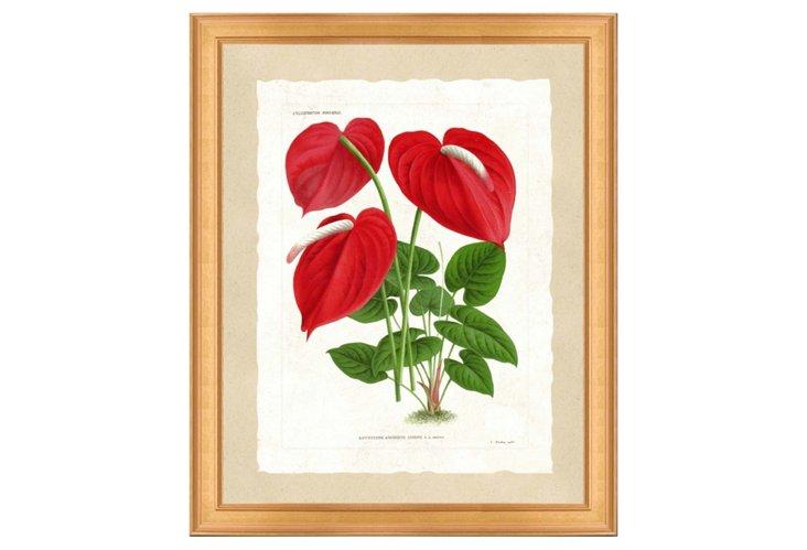 Linden Botanical Print III