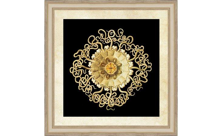 Gold Haeckel Print III