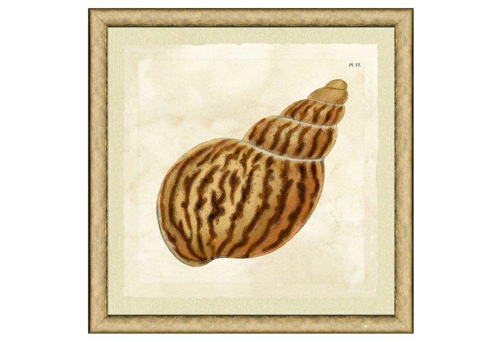 Single Shell Print II