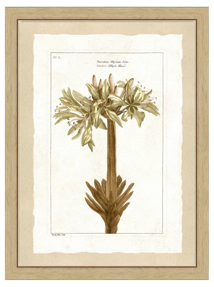 Golden Botanical Print II
