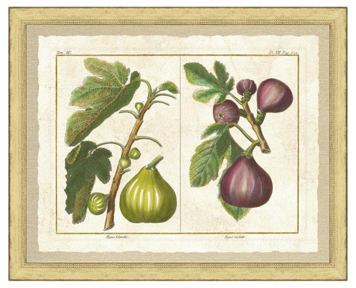 Fruit Print I