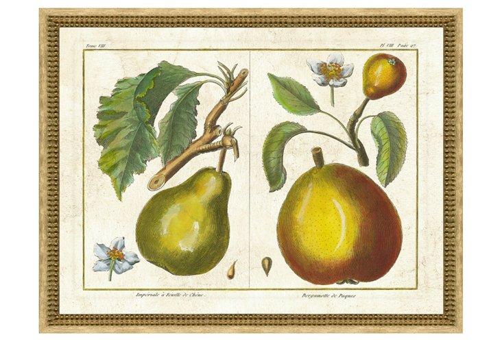 Fruit Print II