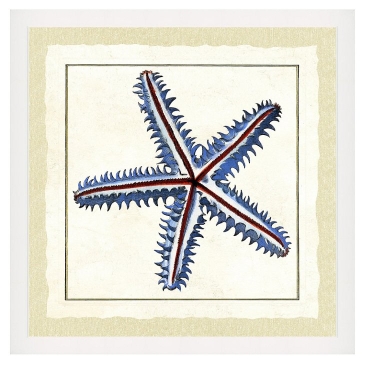 Starfish Print I
