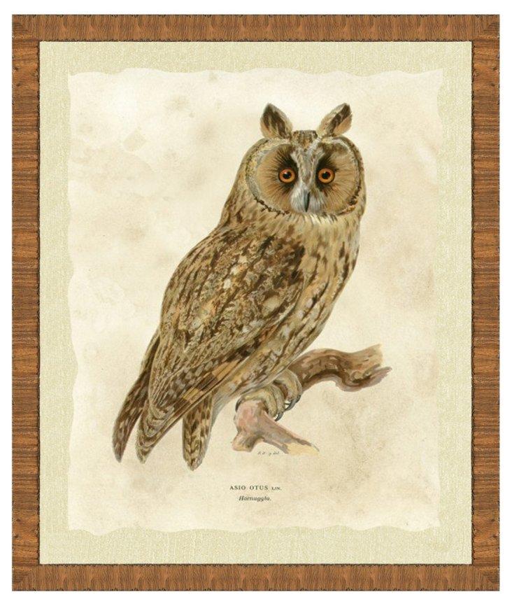Wood Framed Owl Print II