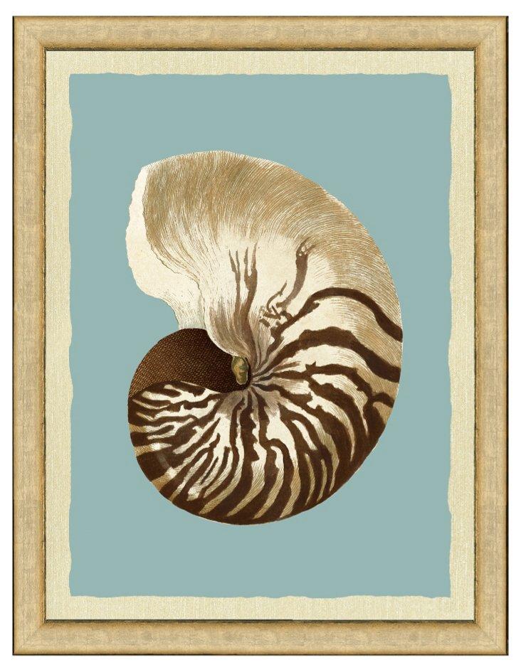 Sepia Shell on Teal Print I