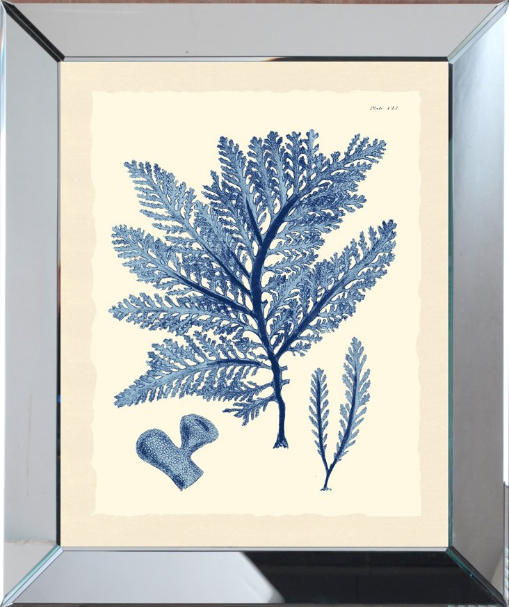 Mirror Framed Navy Seaweed Print I