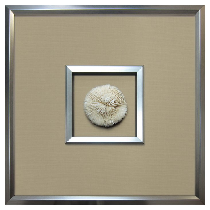 Authentic Mushroom Coral Framed