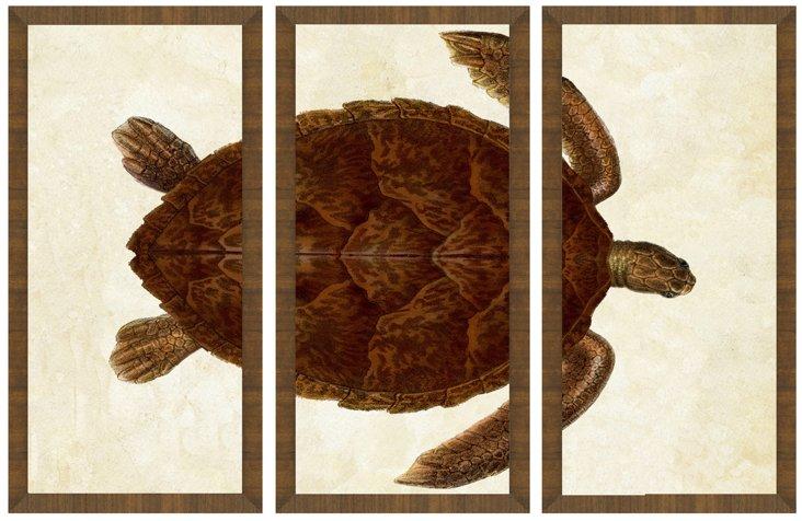 Wood Framed Turtle Triptych-DNU VC
