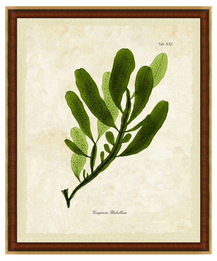 Wood and Gold Framed Seaweed Print