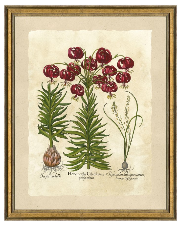 Botanical Bulb Print I