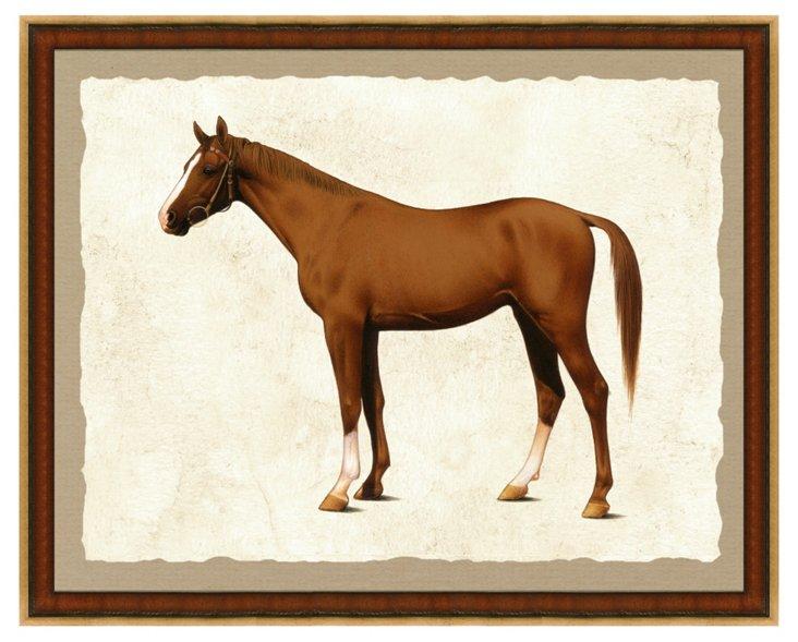 Horse Print II