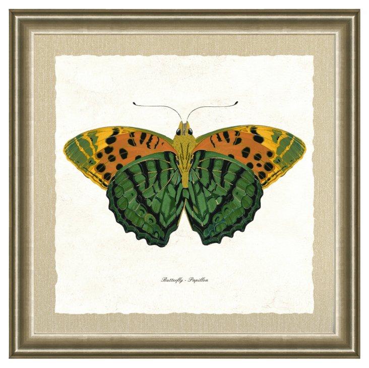 Silver Framed Butterfly Print II