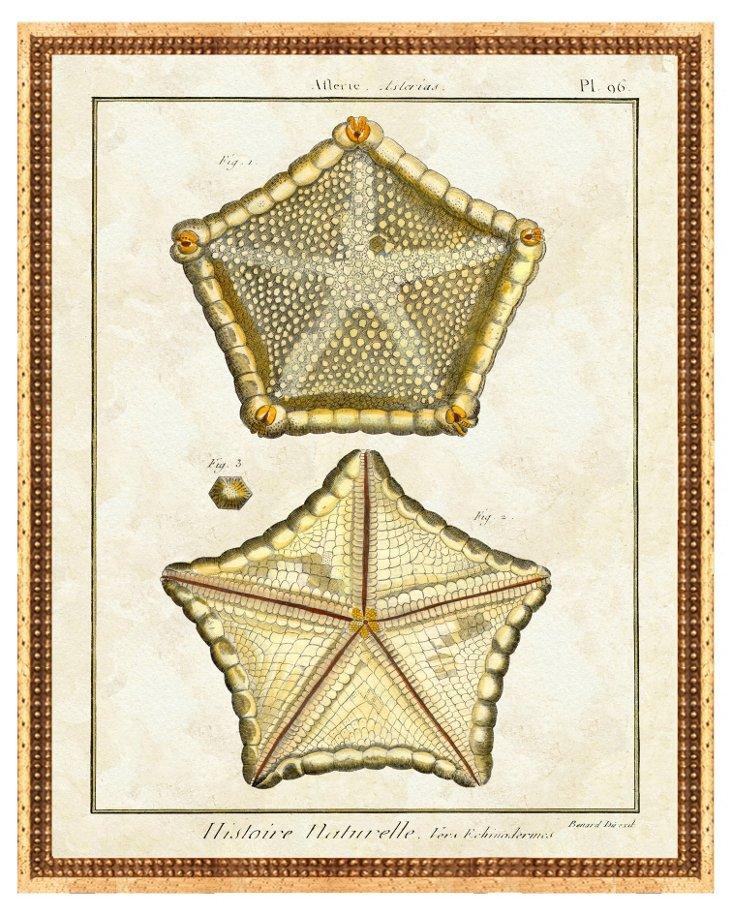 Gold Framed Sea Life Print II