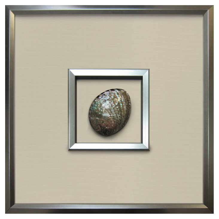 Authentic Abalone Shell Framed
