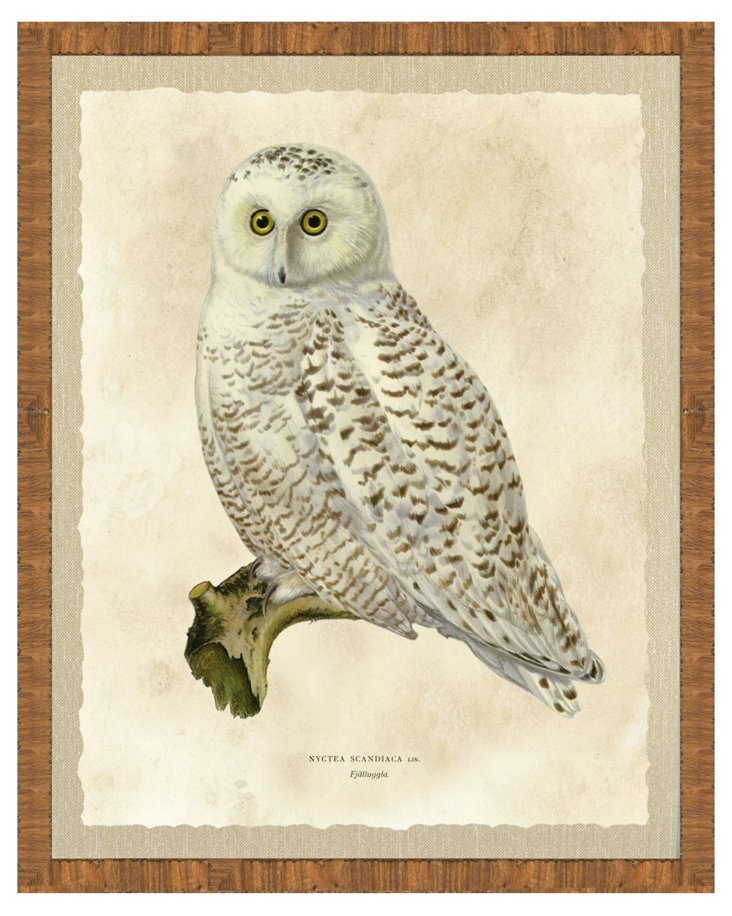 Wood Framed Owl Print I