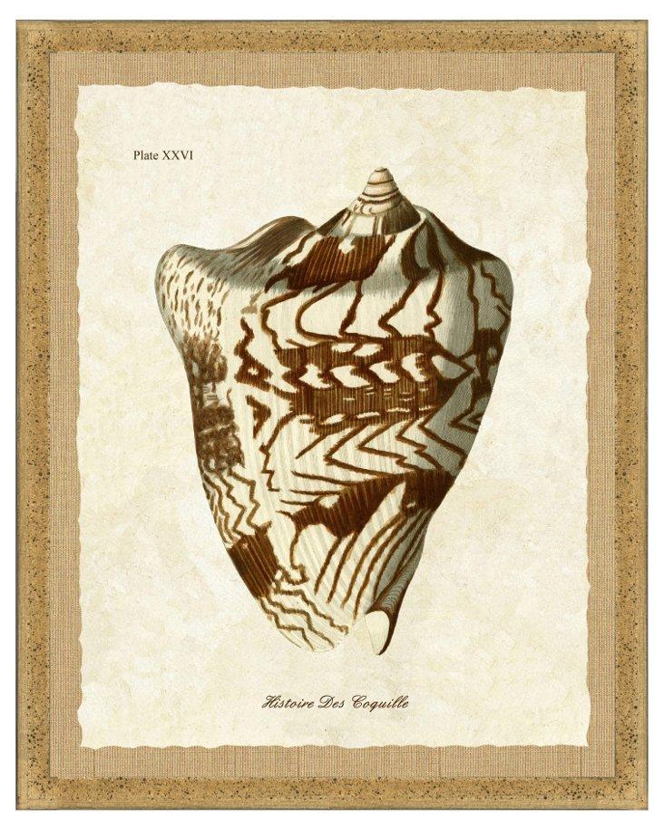 Flecked Brown Framed Shell Print I
