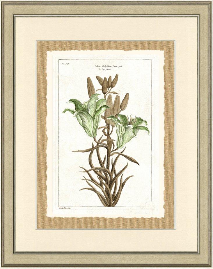 Green Botanical Print III