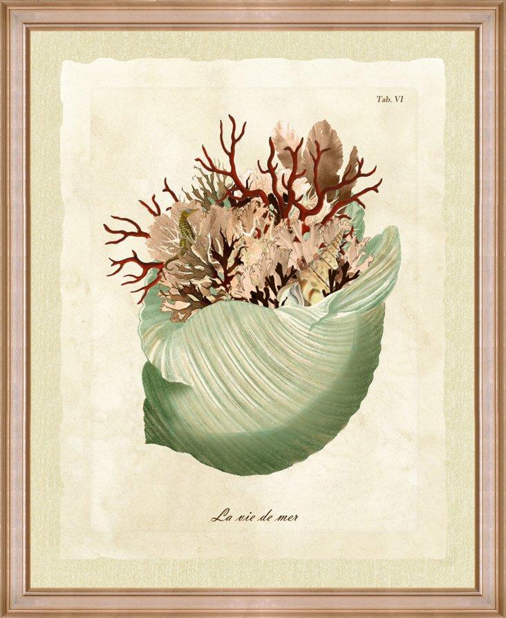 Sea Life Shell II