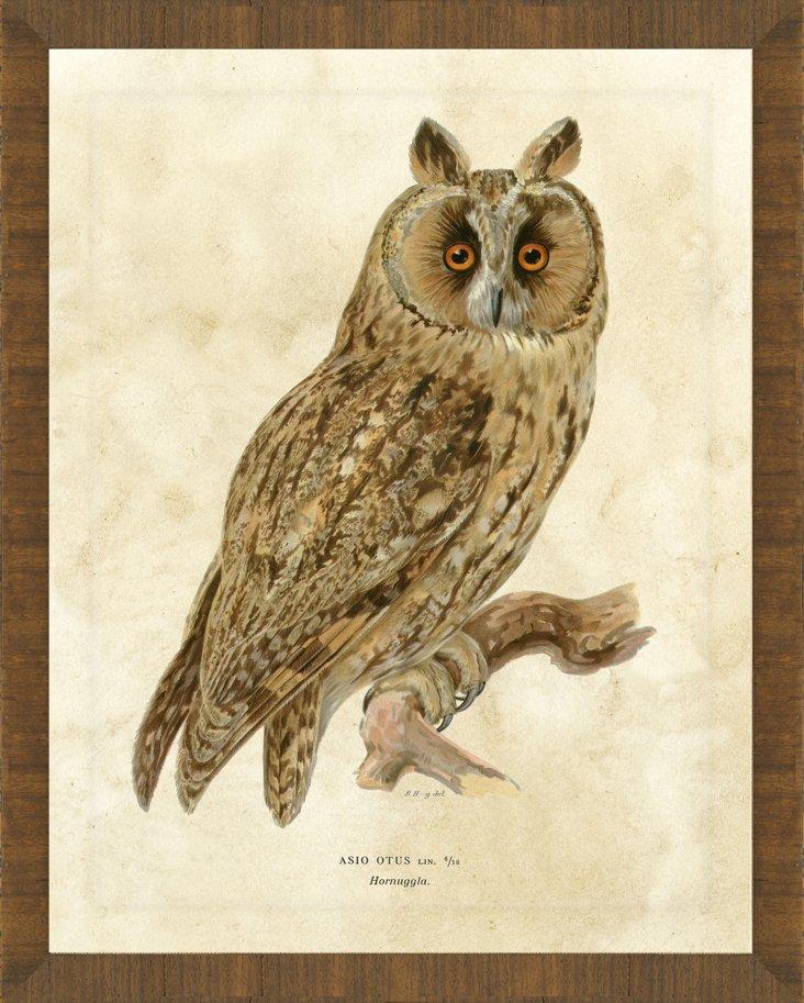 Honey Tone Framed Owl Print II