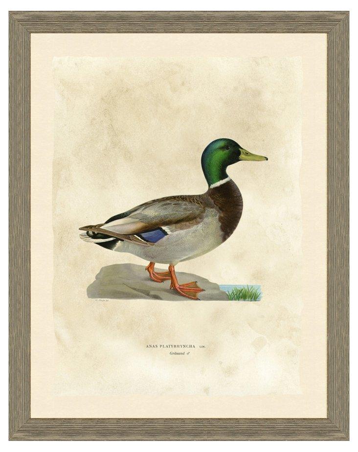 Duck Print I