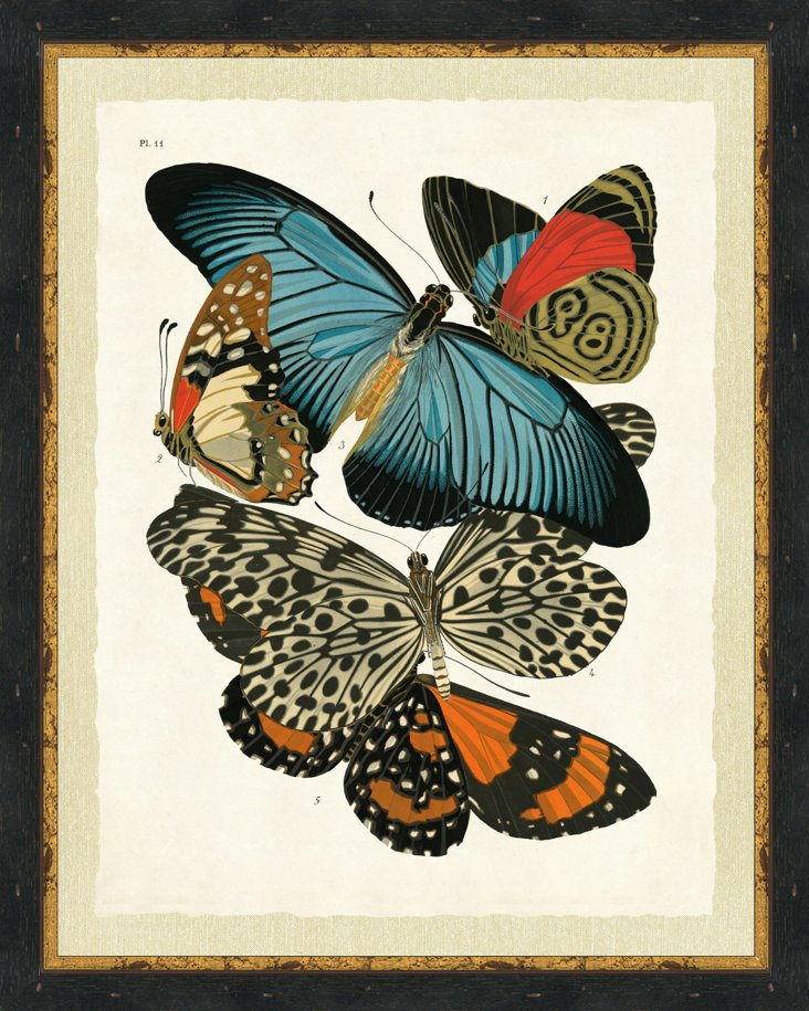 Ebony Framed Butterfly Collage
