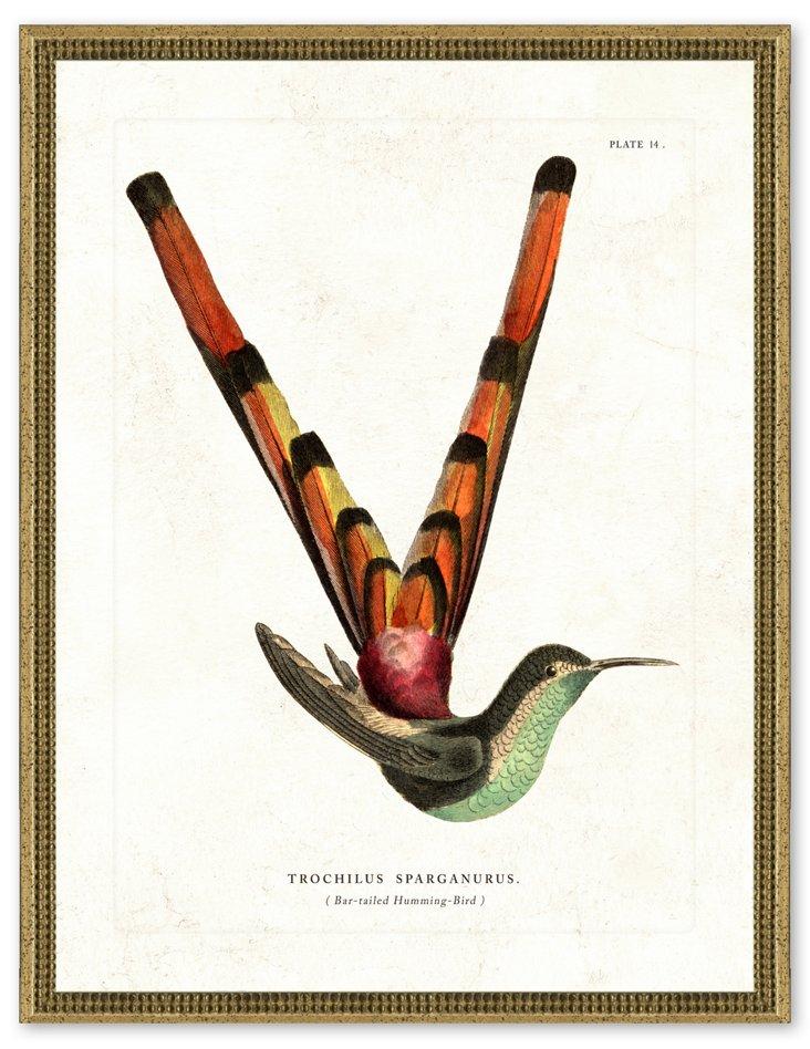 Rustic Silver Framed Hummingbird Print I
