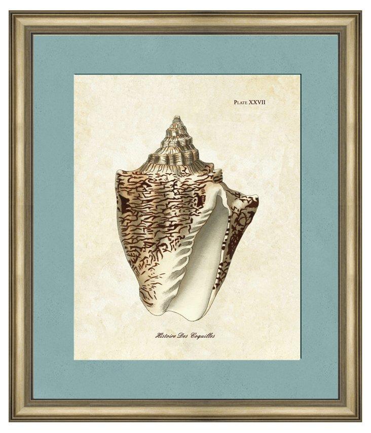 Sepia Shell I
