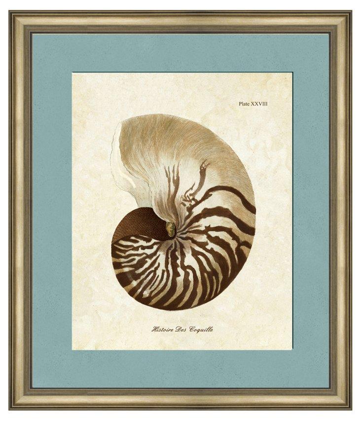 Sepia Shell II