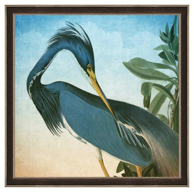 Audubon, Heron