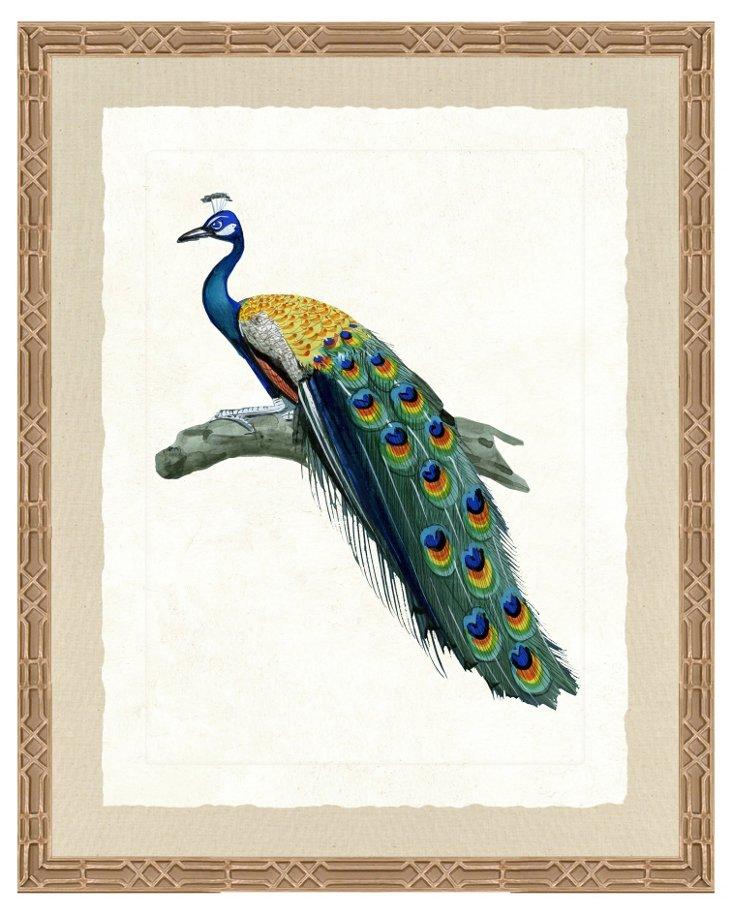Ornate Silver-Framed Peacock Print II