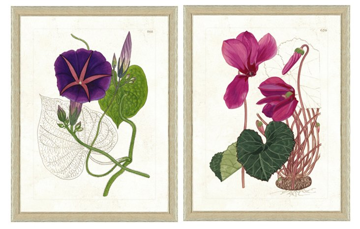 Botanical Diptych II