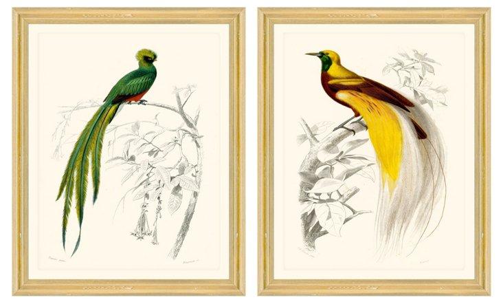Colorful Bird Print Set