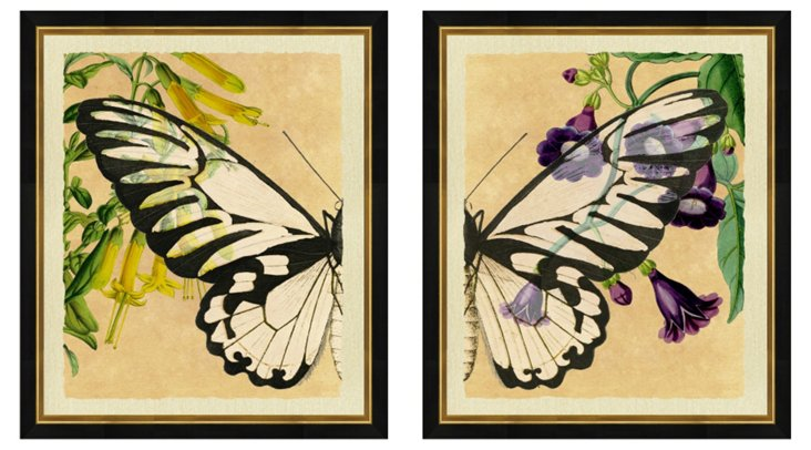 Butterfly Diptych